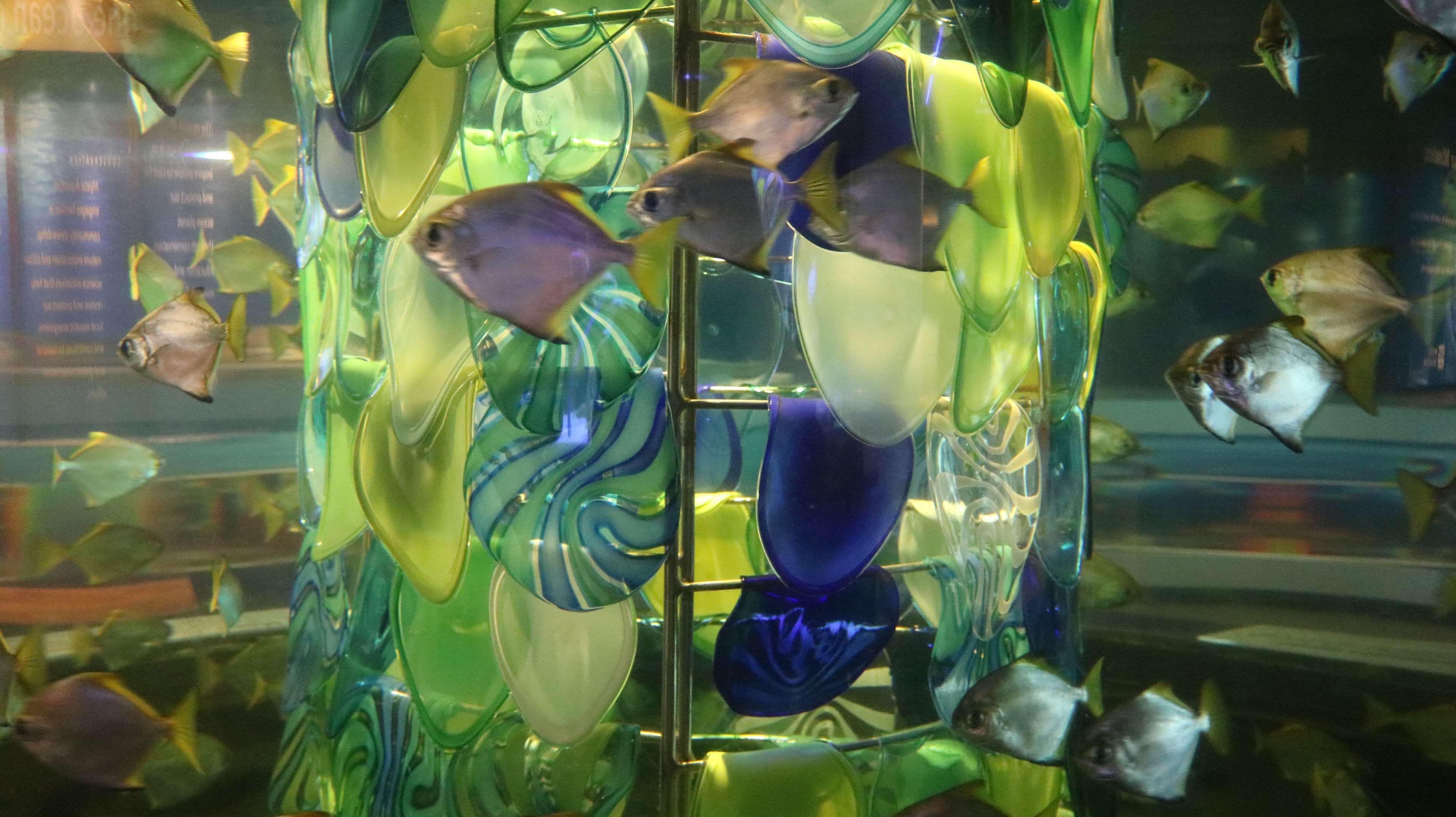 aquarium fish fish tank relaxing water