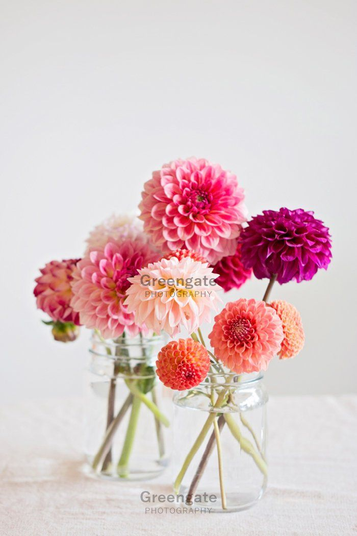 Dahlia Photo Print - flower still life, dahlias in jars, lifestyle, botanical art, flower photography, wall hanging, gifts for her, pink