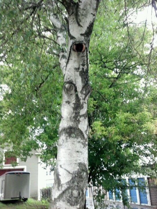 tree people?