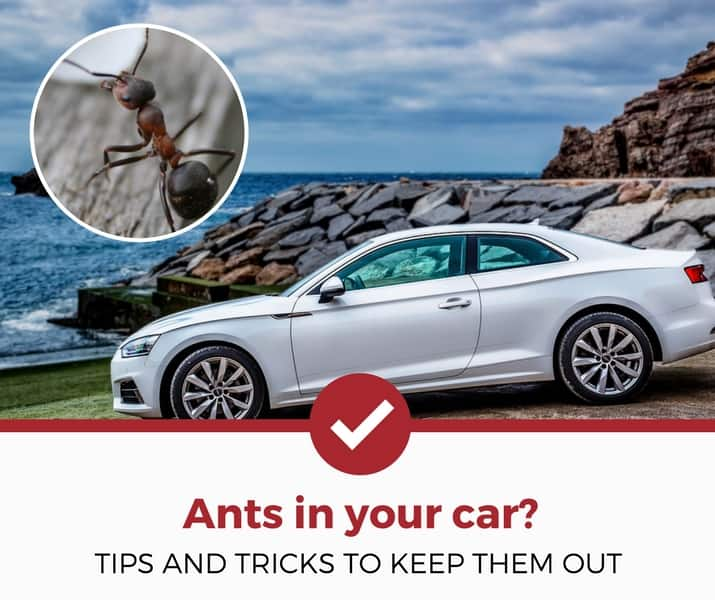 How To Get Rid Of Ants Inside Your Car Simple Guide Pest Strategies Rid Of Ants Get Rid Of Ants Ants