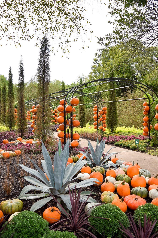 harvest in Cheekwood Botanical Garden