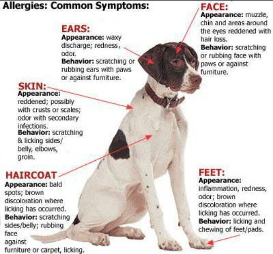 Here Are Some Common Allergy Symptoms Dog Skin Oils For Dogs