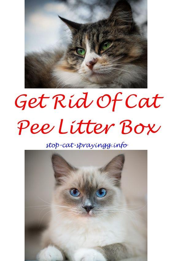 Cat Urine Marking How To Stop Cat Spraying Front Door Stop Cat