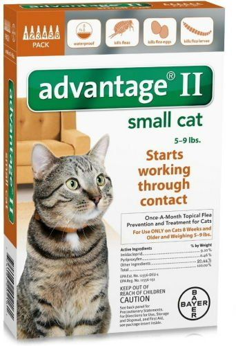 12 Month Advantage Orange For Cats Under 9lbs Small Cat Cat Fleas