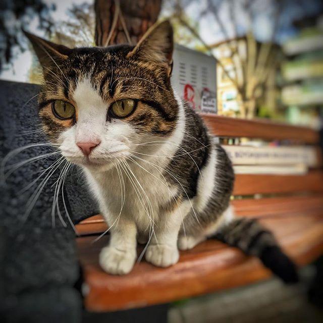 #HappyCaturday  〰〰〰〰〰〰〰〰〰〰〰〰〰〰〰〰〰 #catsofinstagram #catsofistanbul