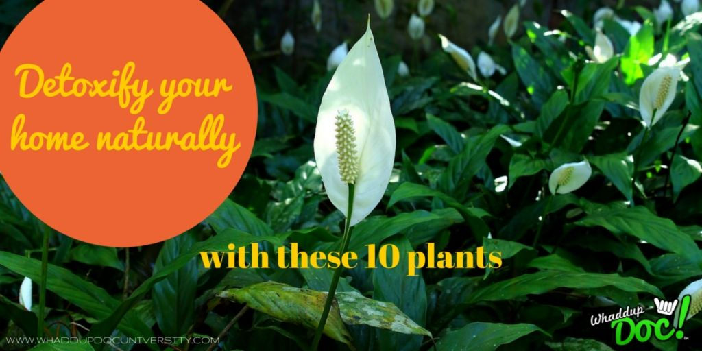Use these 10 plants to detoxify your home from the adverse chemicals you're being exposed to from the everyday products you're using!