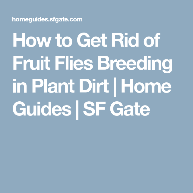 How to Get Rid of Fruit Flies Breeding in Plant Dirt ...
