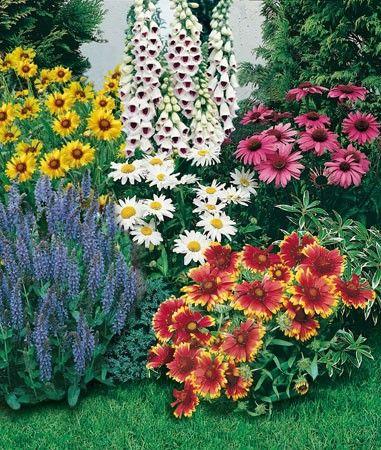 Collection vivaces massifs et bouquets jardin for Jardin fleurs vivaces