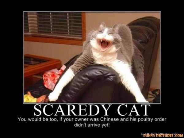 Image Result For Funniest Scared Cat Memes With Images Cats