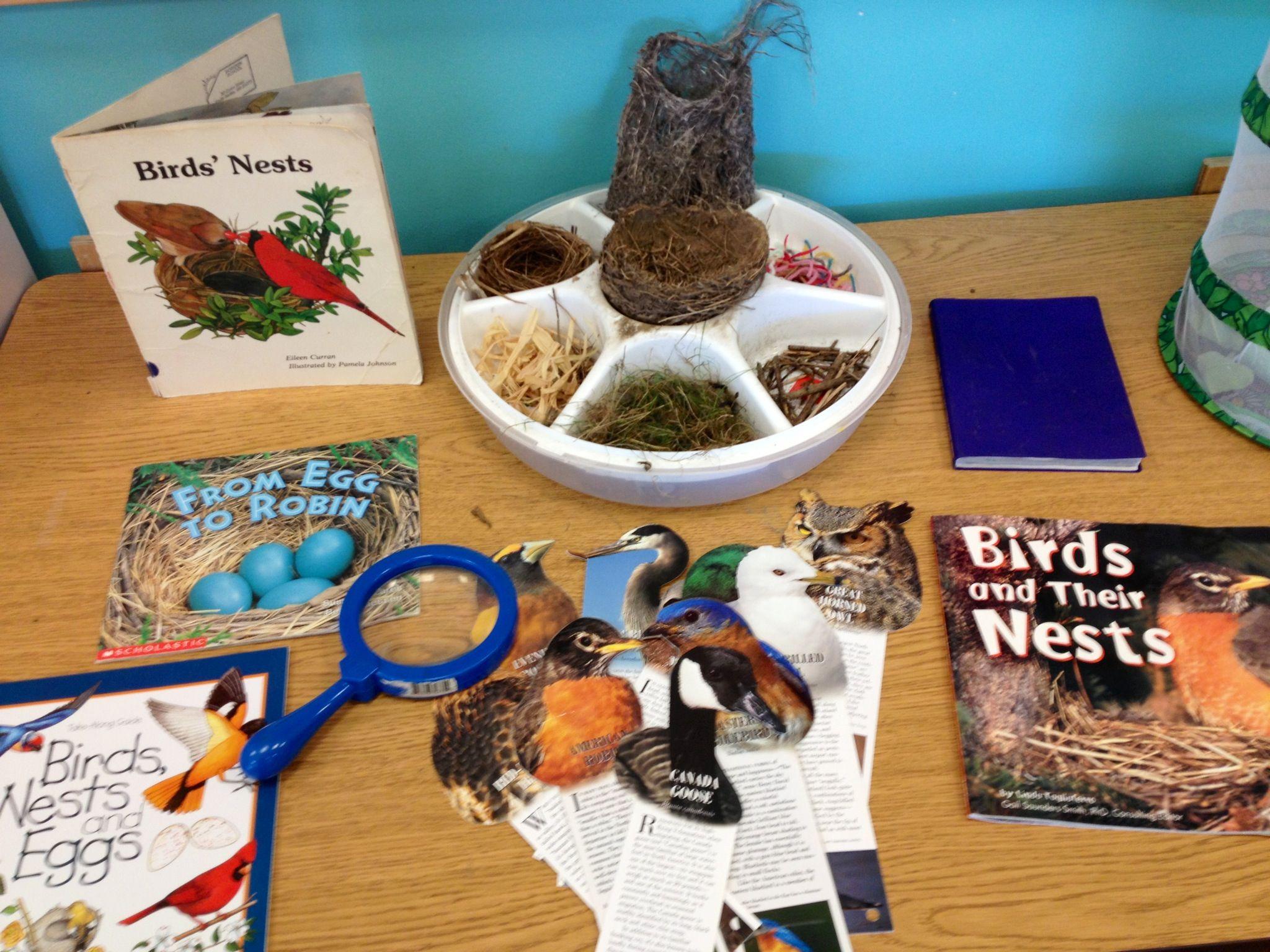 Bird Nest Science Table