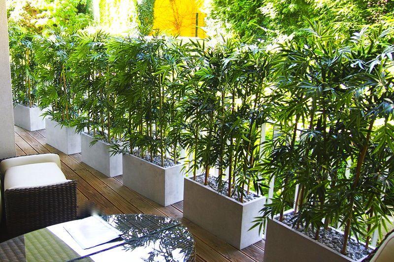 Künstliche Bambushecke als Sichtschutz von Bella Planta
