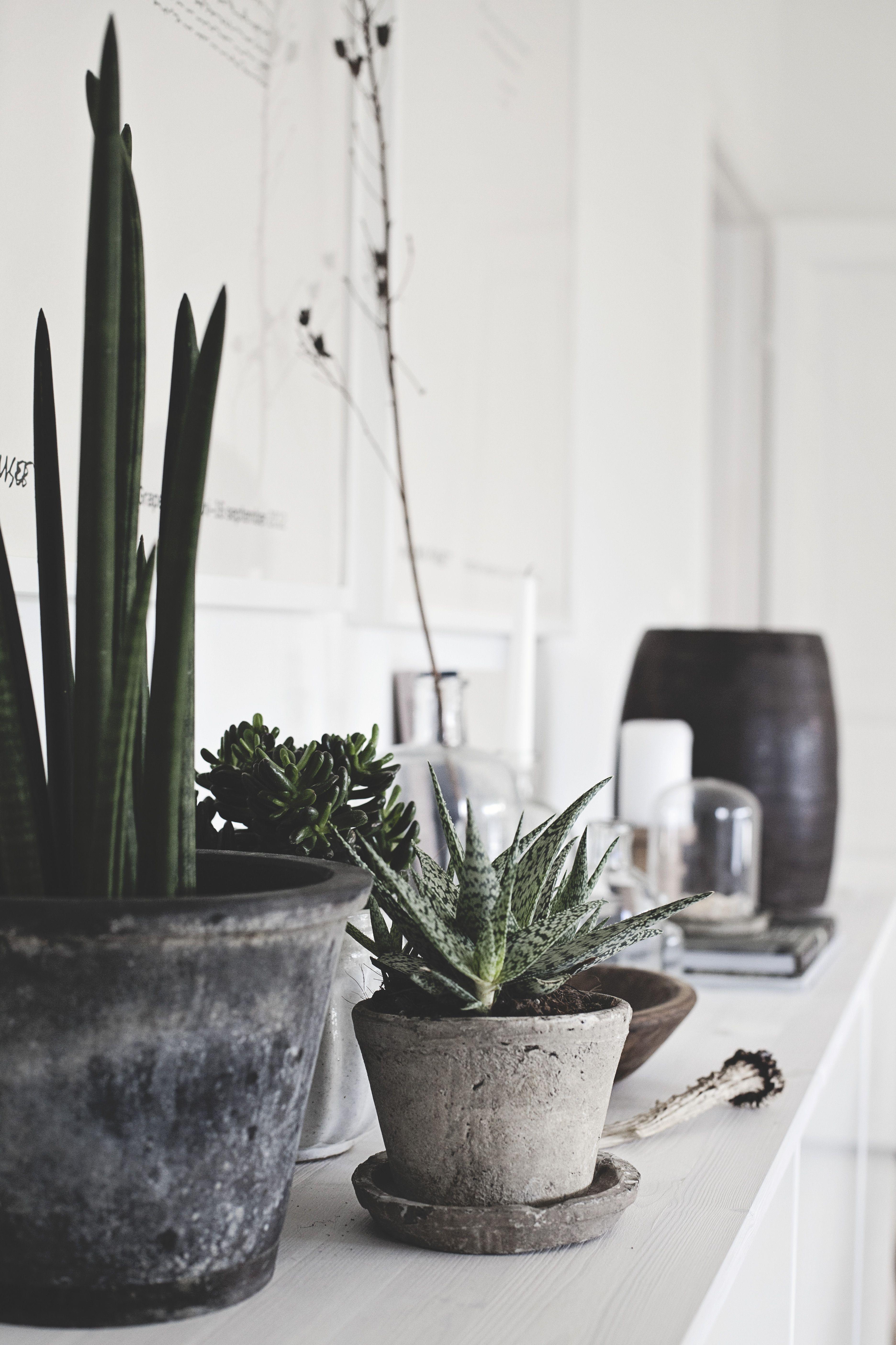 gröna växter sovrum