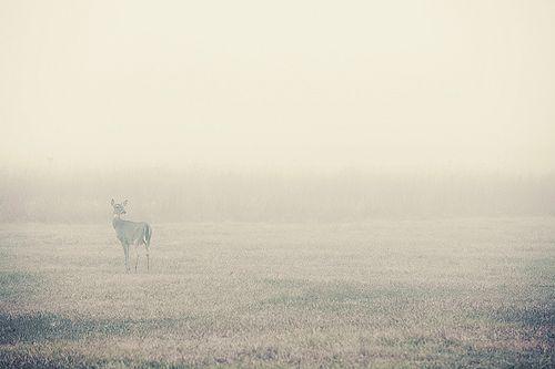 exhale: slight clutter on flickr