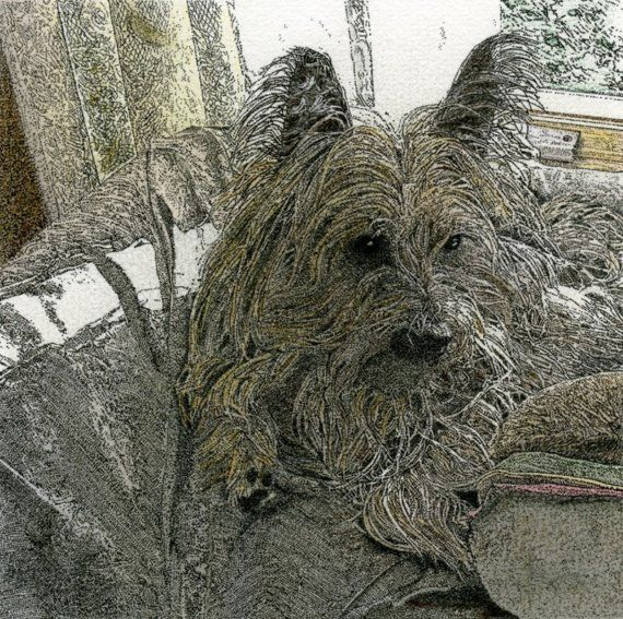 Love This Cairn Ink Colored Pencil Using A Stippling Technique 25 At Etsy Cairn Terrier Dog Art Terrier