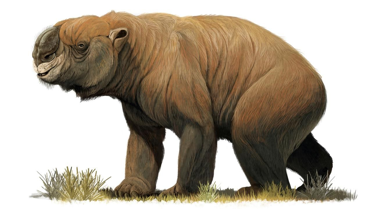 The Lost Giants That Prowled The Australian Wilderness Extinct Animals Animals Prehistoric Animals