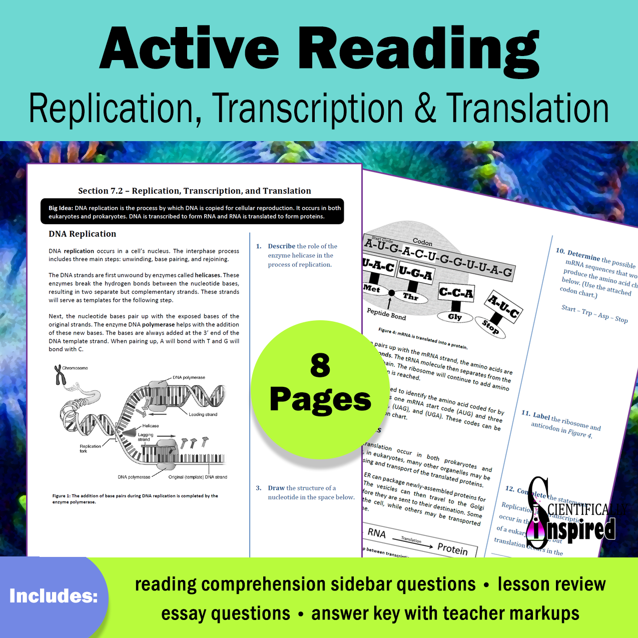 Active Reading Replication Amp Protein Synthesis