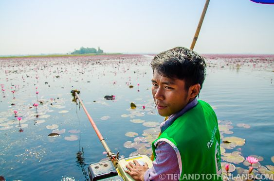 Red Lotus Sea in Udon Thani, Thailand Tieland to Thailand