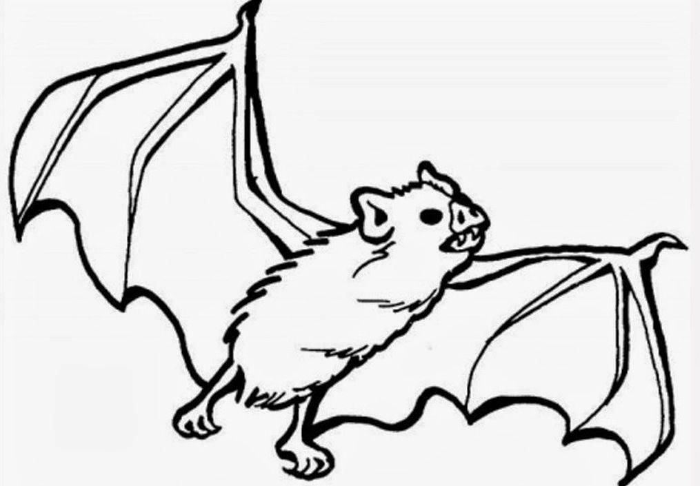 Animal Bat Coloring Pages - http://www.kidscp.com/animal-bat ...