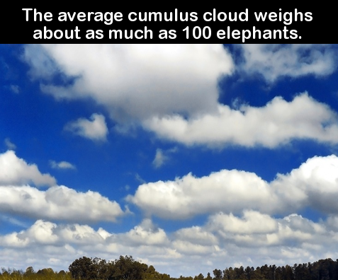 Fun Facts To Fill Your Brain Brain - 18 shocking facts nature