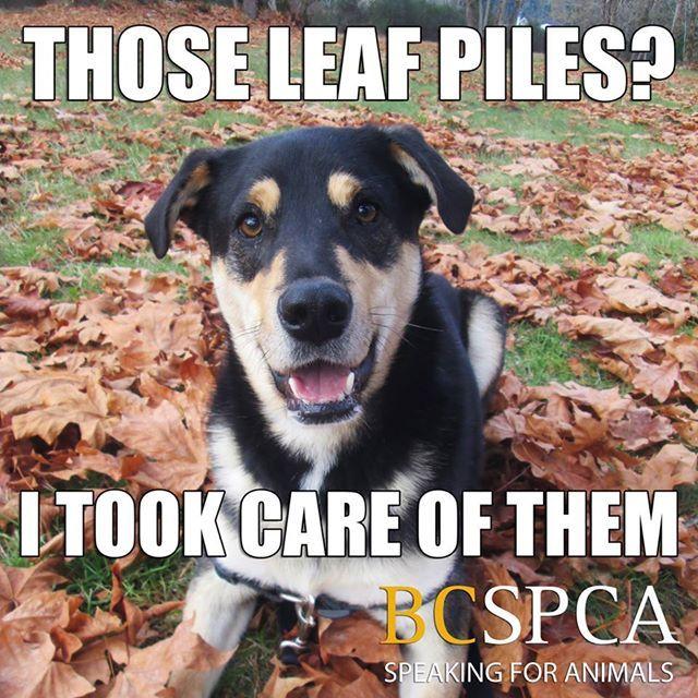 Adoption Page Animals, Animal rescue, Pet care