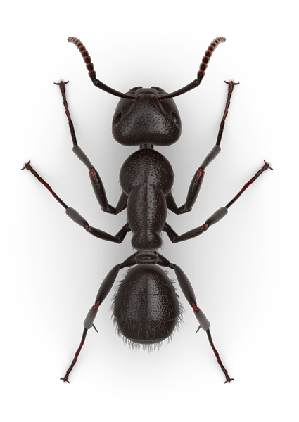 Pin By Rashad Pozdnyakov On Insects Grumpy Face Ants Insects
