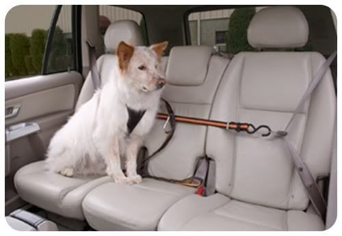 Dog Harness And Attachments Jeep Wrangler Forum Dog Seat Belt