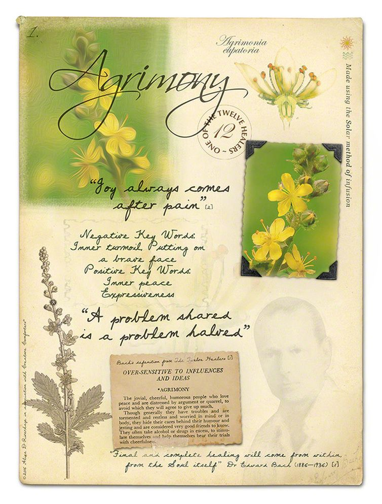 Agrimony Bach Flower Picture Card