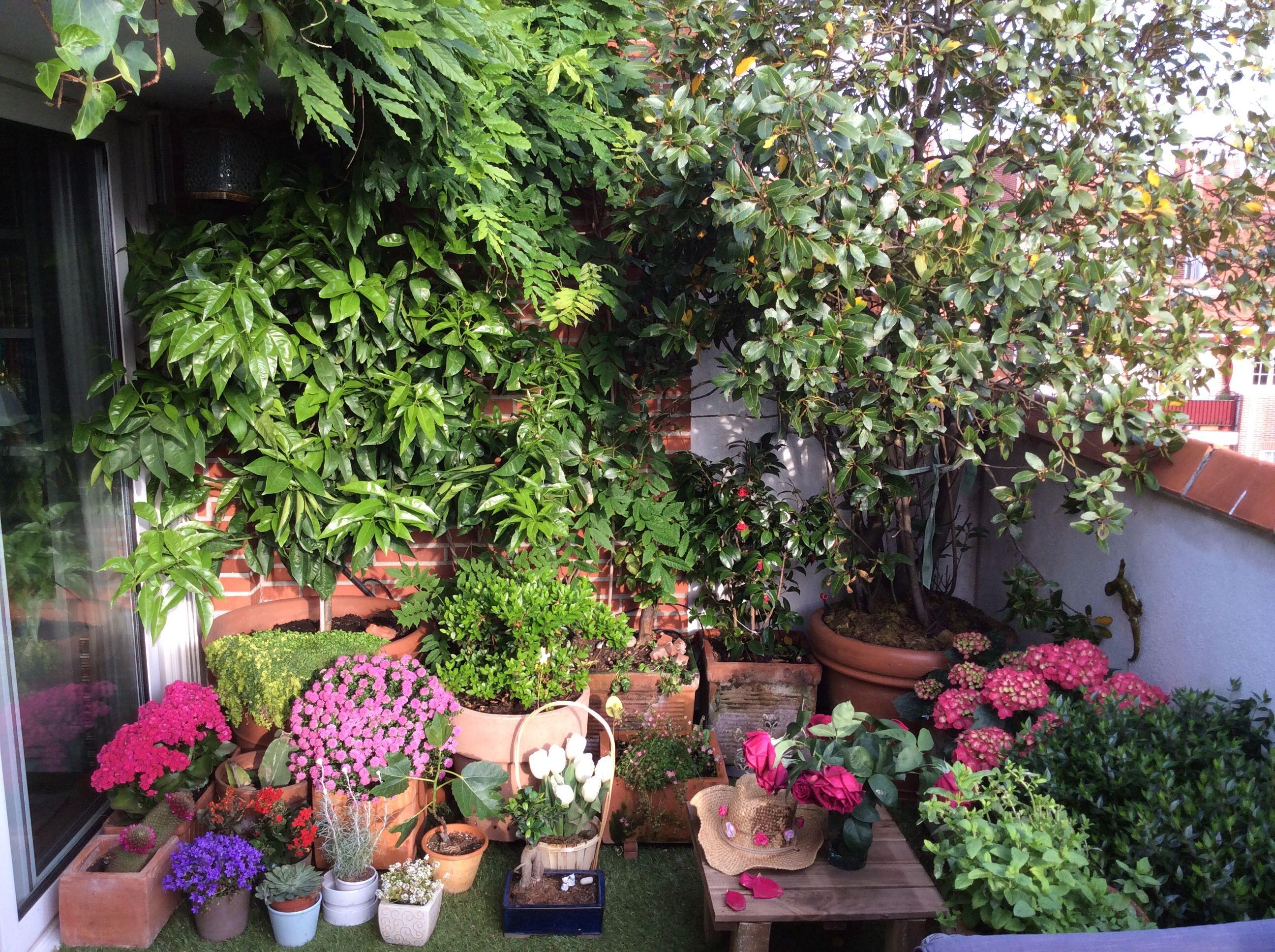 Pin By Nuria Bernabe Fernandez On Terraces Balconies Pequenas Terrazas Plants Small Garden Edible Plants