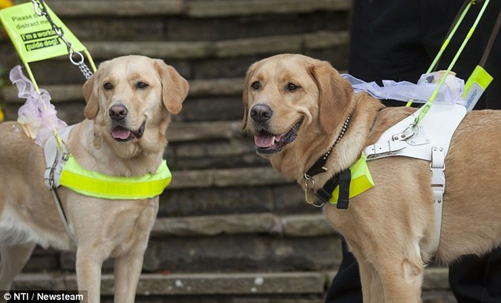 Blind Couple Marries After Their Guide Dogs Fall in Love