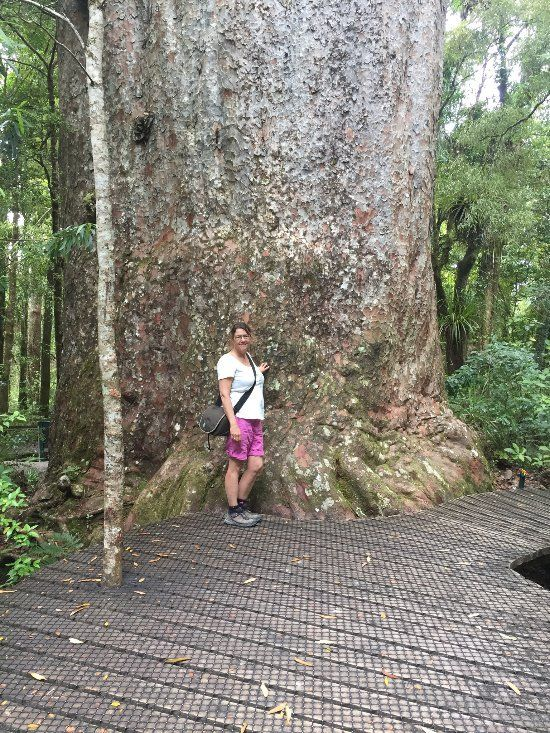 Tane Mahuta Walk (Opononi, New Zealand): Top Tips Before You Go - TripAdvisor