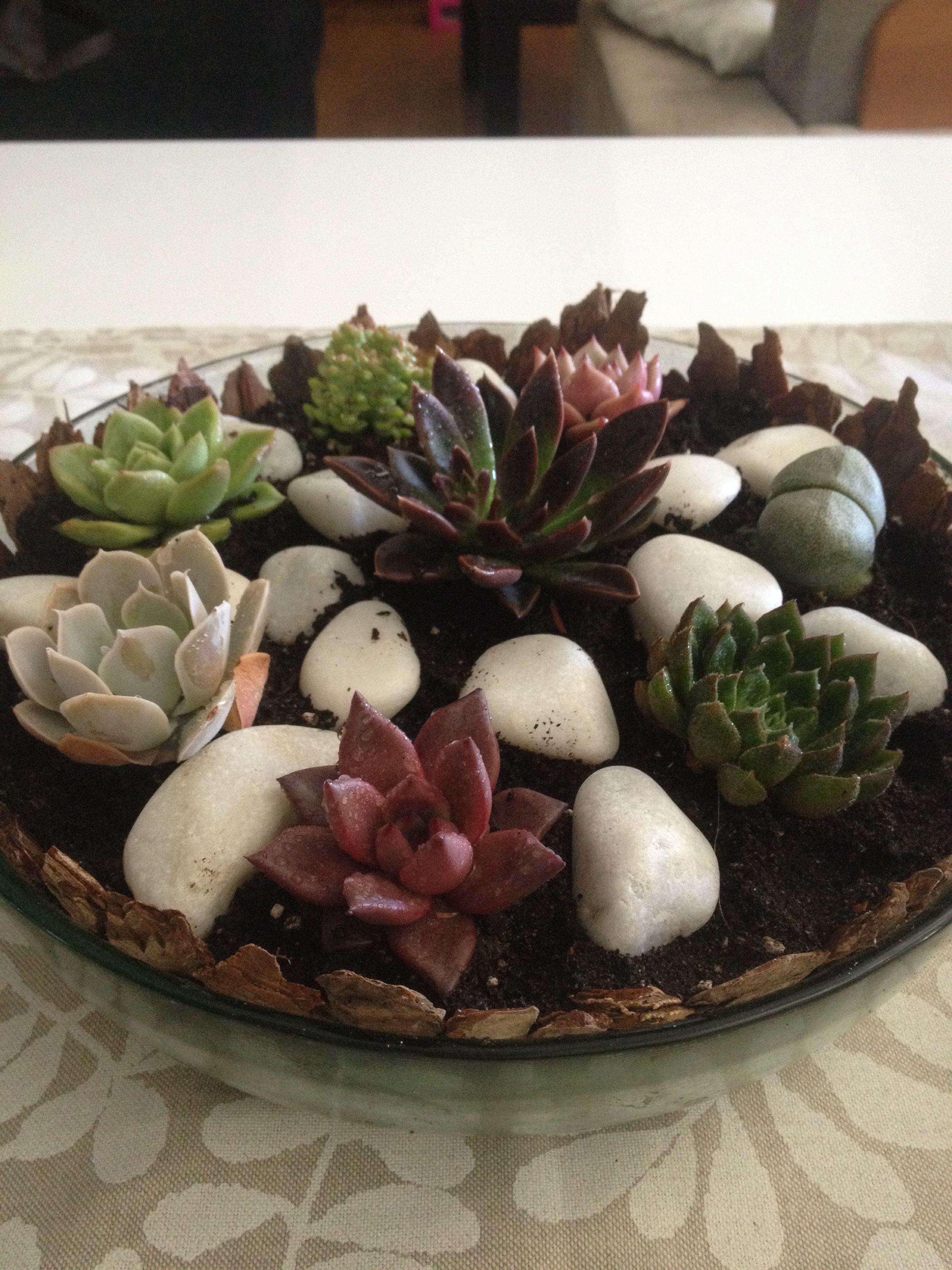 Mini jardín de cactus