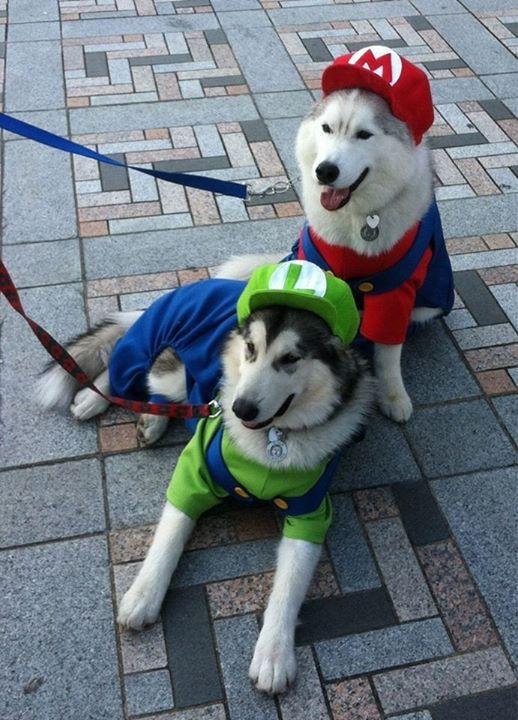 Mario Luigi Dog Emma Pinterest Dog Halloween Costumes Dog