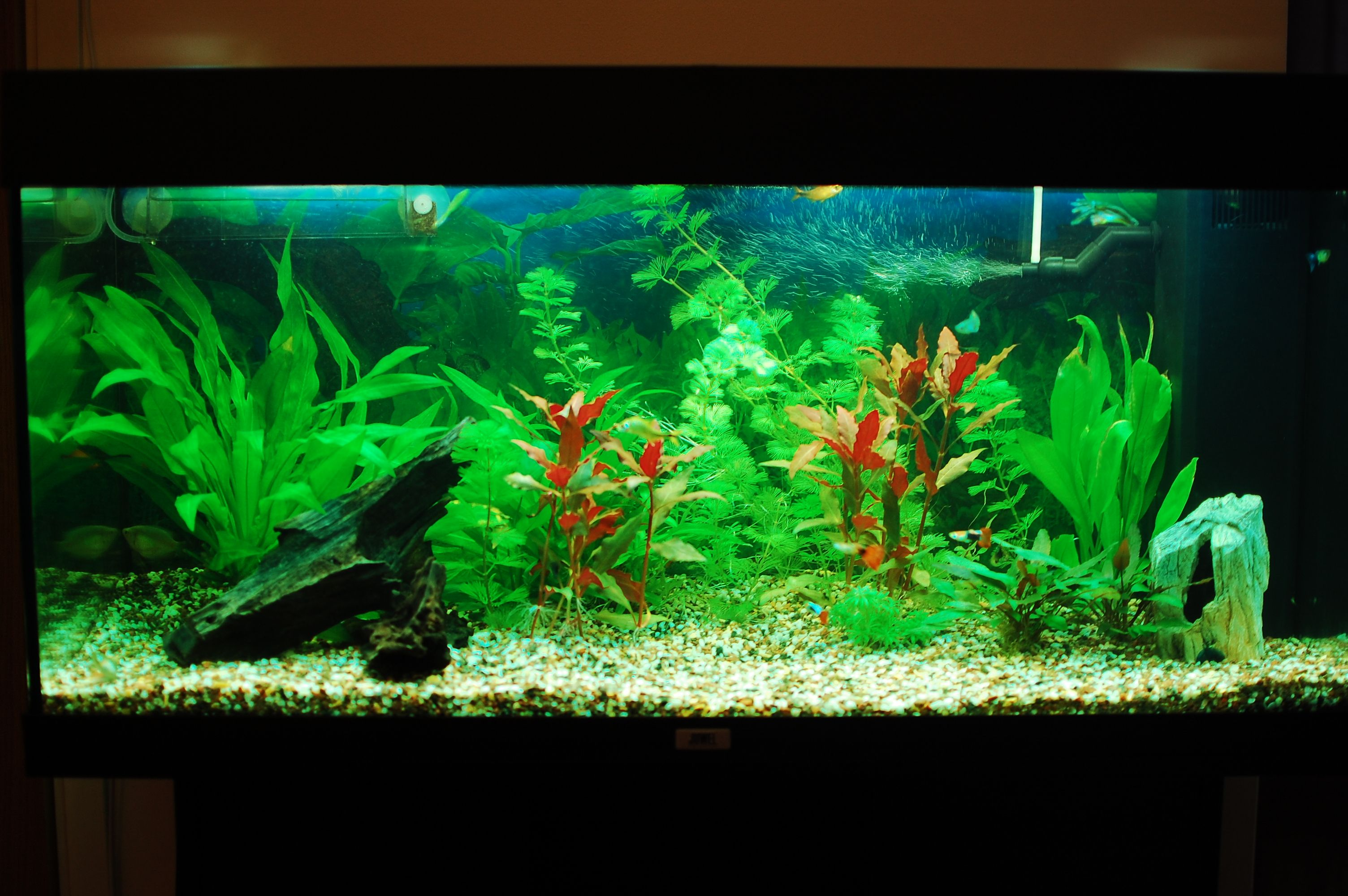 Fish aquarium is good in home - Beautiful Aquarium Wallpaper 44721 Open Walls