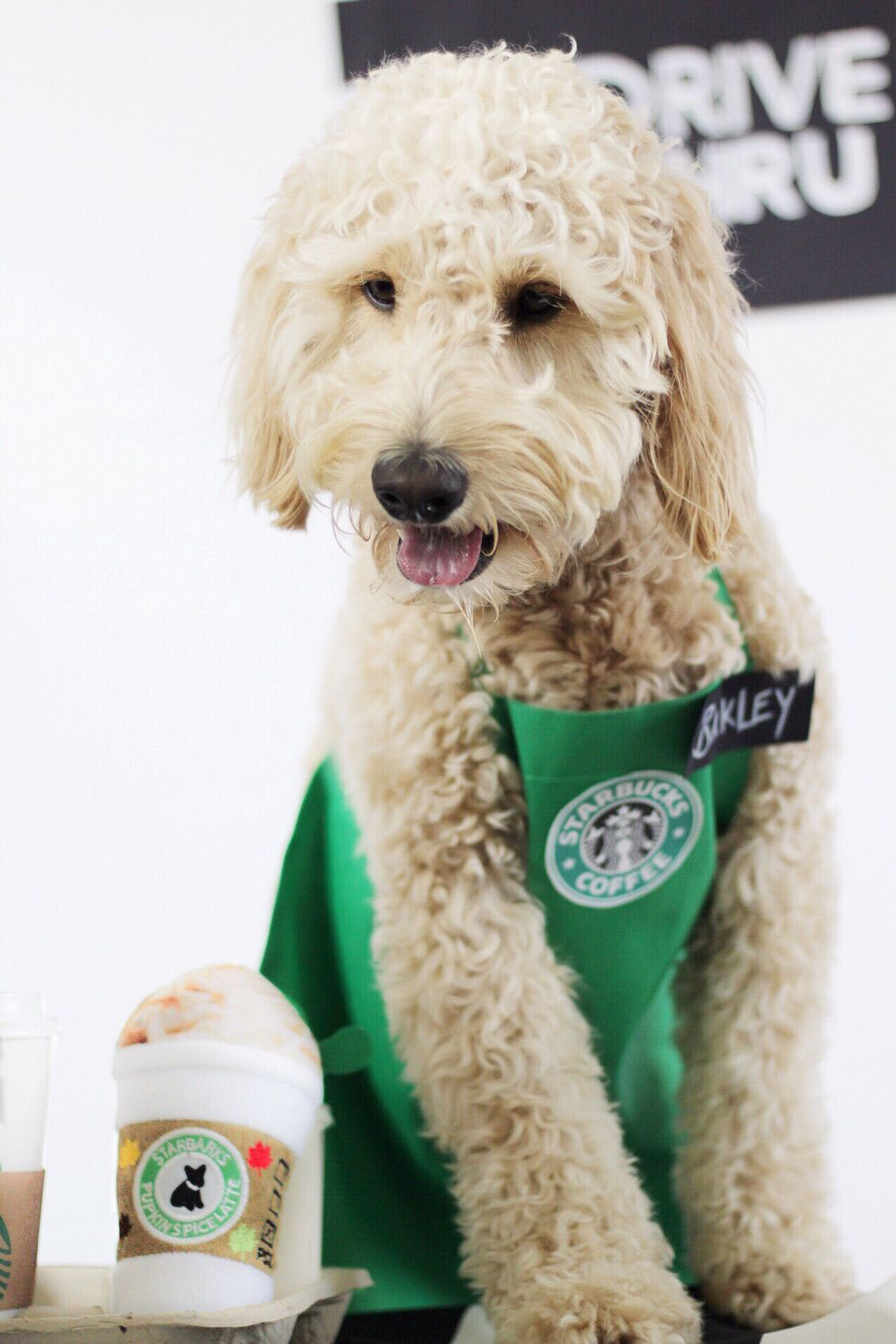 Diy Starbucks Barista Halloween Dog Costume Tutorial Dog