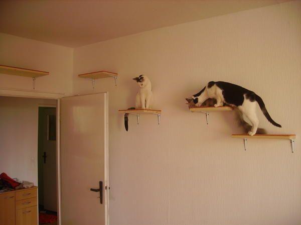 kleine wohnung katzengerecht gestalten cats pinterest katzen katzen wohnungen und hund. Black Bedroom Furniture Sets. Home Design Ideas