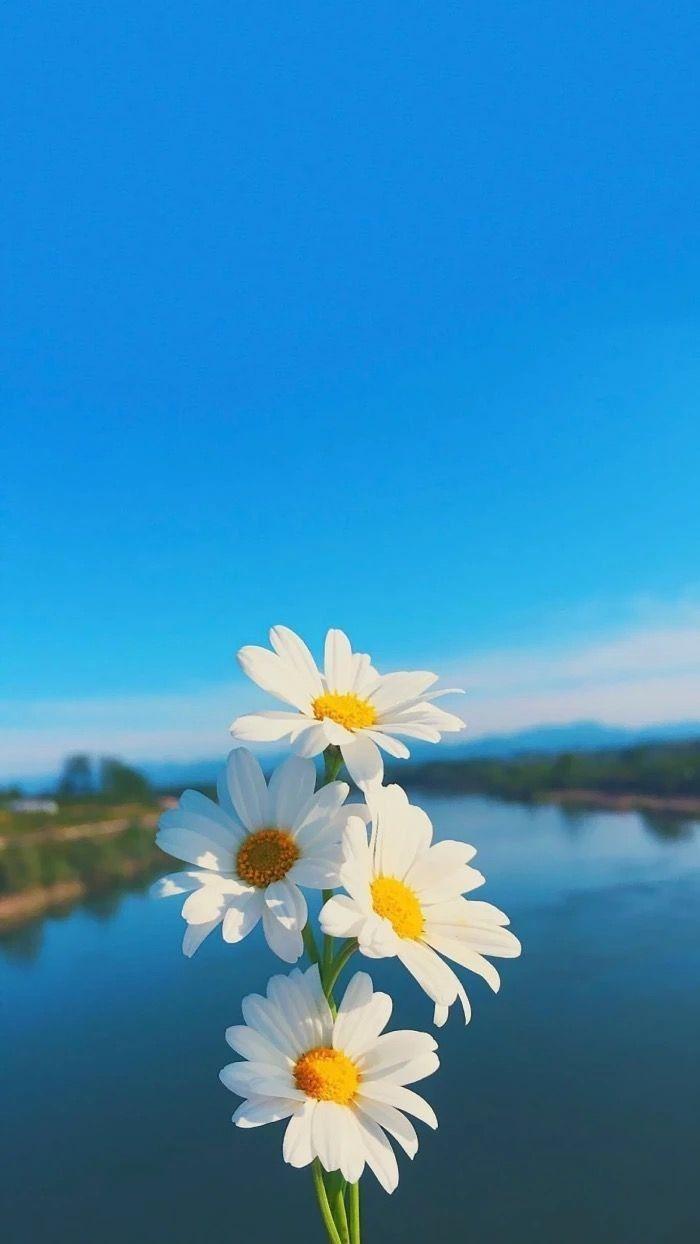 Bild über die Fotografie in ورد � Blumen von YASMIN ️ - #about #flowers #image #Fotografie #yasmin
