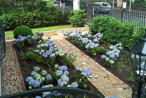 hortensien und buchsbaum f r vorgarten garten pinterest garten garten ideen und buchsbaum. Black Bedroom Furniture Sets. Home Design Ideas
