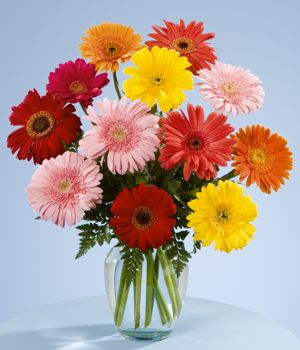 Gerberas are so bright and cheery. My favourite cut flower.