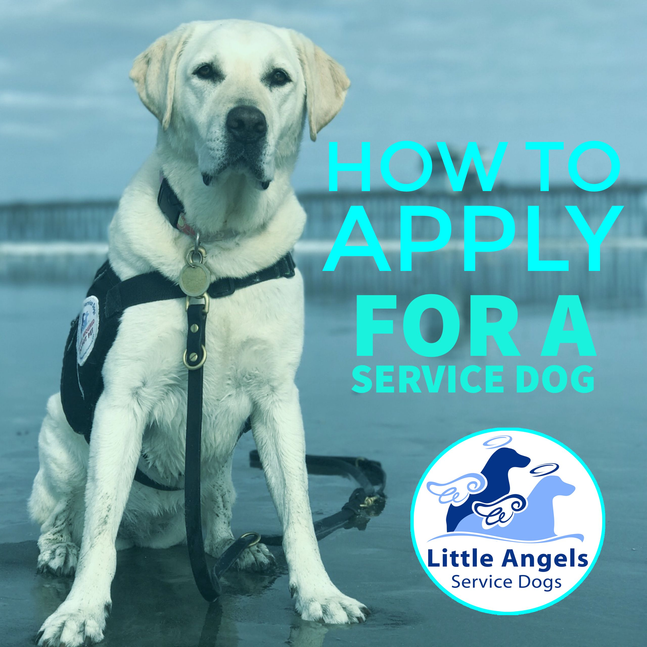 Apply For A Service Dog From Little Angels Service Dogs San Diego