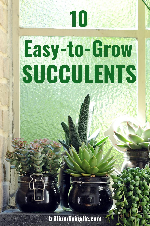 10 EasytoGrow Succulents EasytoGrow Succulents in 2020