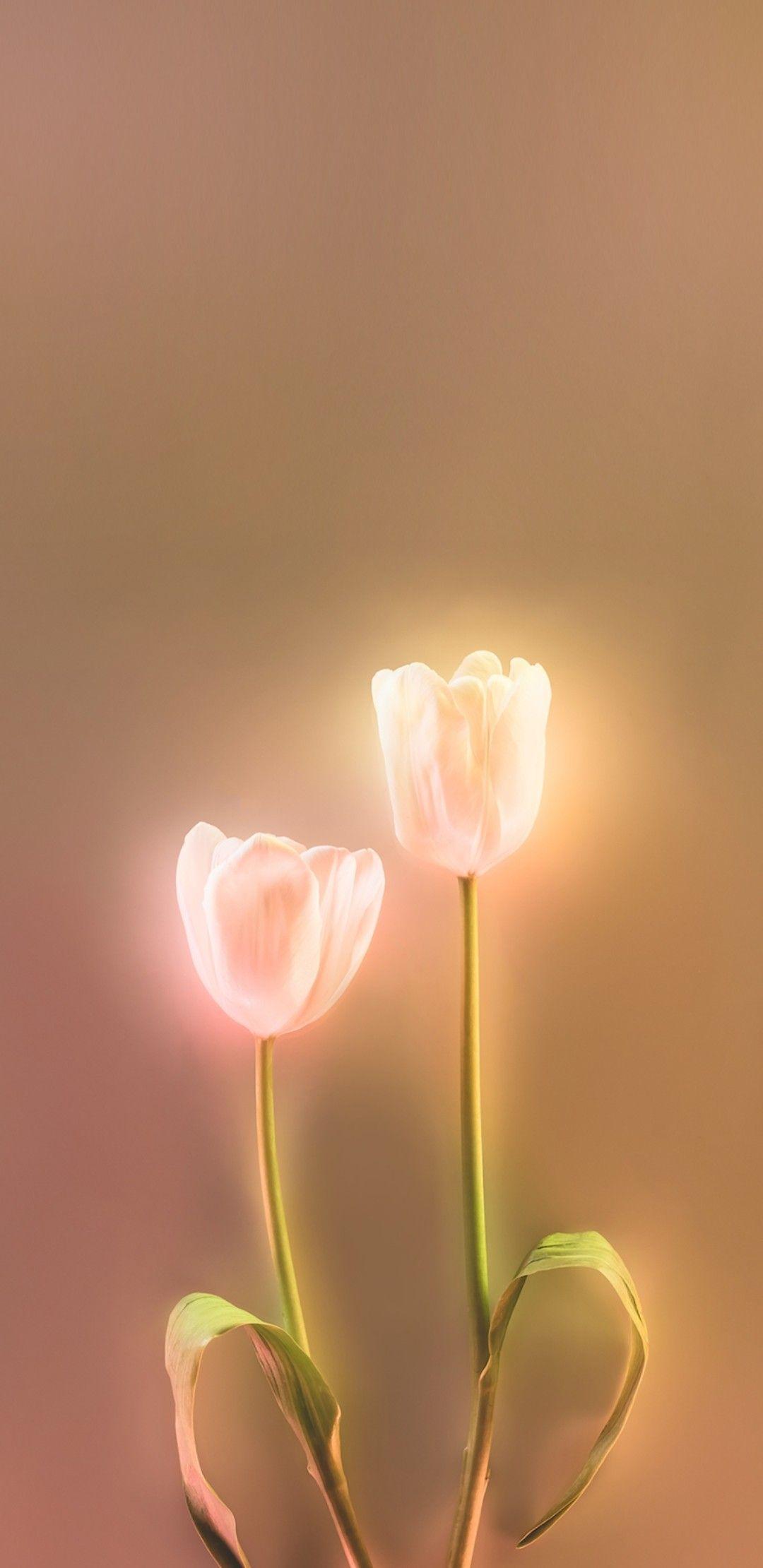 Easter Fondos De Pantalla Tulipanes Iphone Fondos De Pantalla Ideas De Fondos De Pantalla