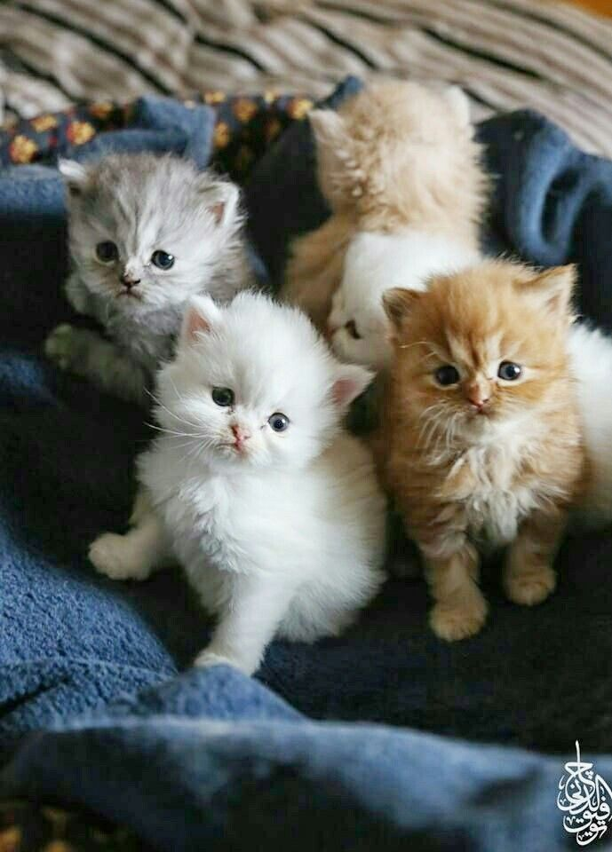 I want all the kittens Cute Cats and Kittens Kittens