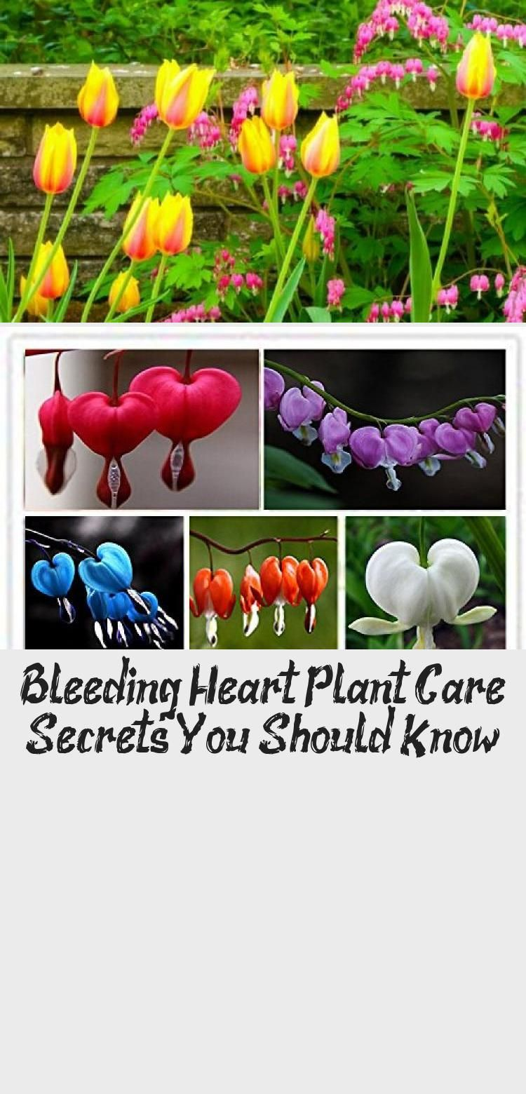 Pictures of Bleeding Heart Tattoos Bing Images Heart
