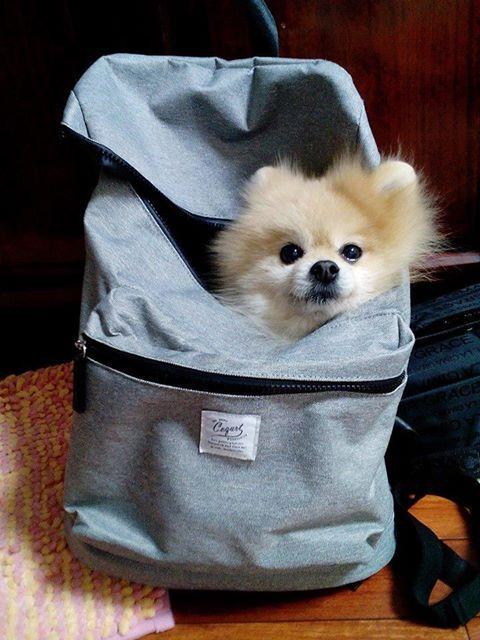 Me han metido en la mochilita. Yo creo que... ¡Si! ¡Me llevan de paseito!