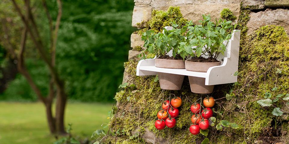 Kreativ Kit Krauterbeet Hangende Tomate Outdoor Kreativ Kits Krauterbeet Pflanzen Hangender Garten