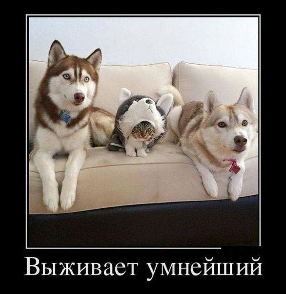 Диалоги   Funny animals, Funny animal pictures, Cute animals