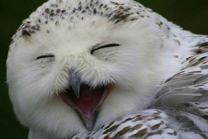 скромных совы смеются картинки словно волшебству