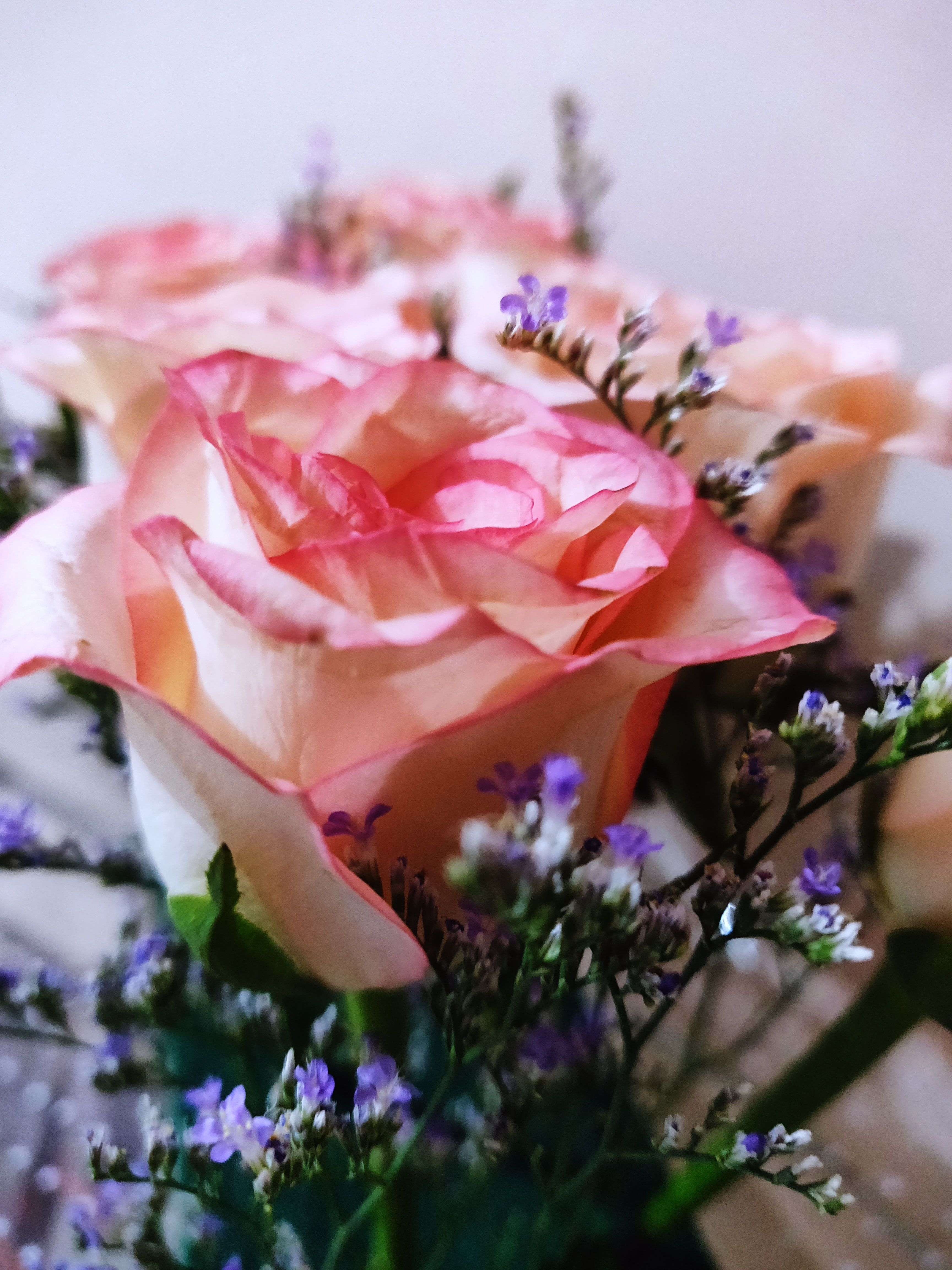 Pink Rose Flowers Beautiful Flowers Images Rose Flower