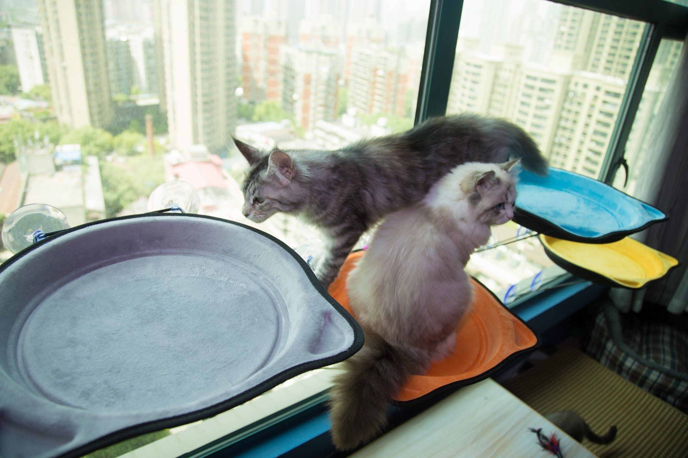 Remarkable Cat Bed Window Seat Perch Sun Bed For Kitten Large Cat Puppy Dailytribune Chair Design For Home Dailytribuneorg
