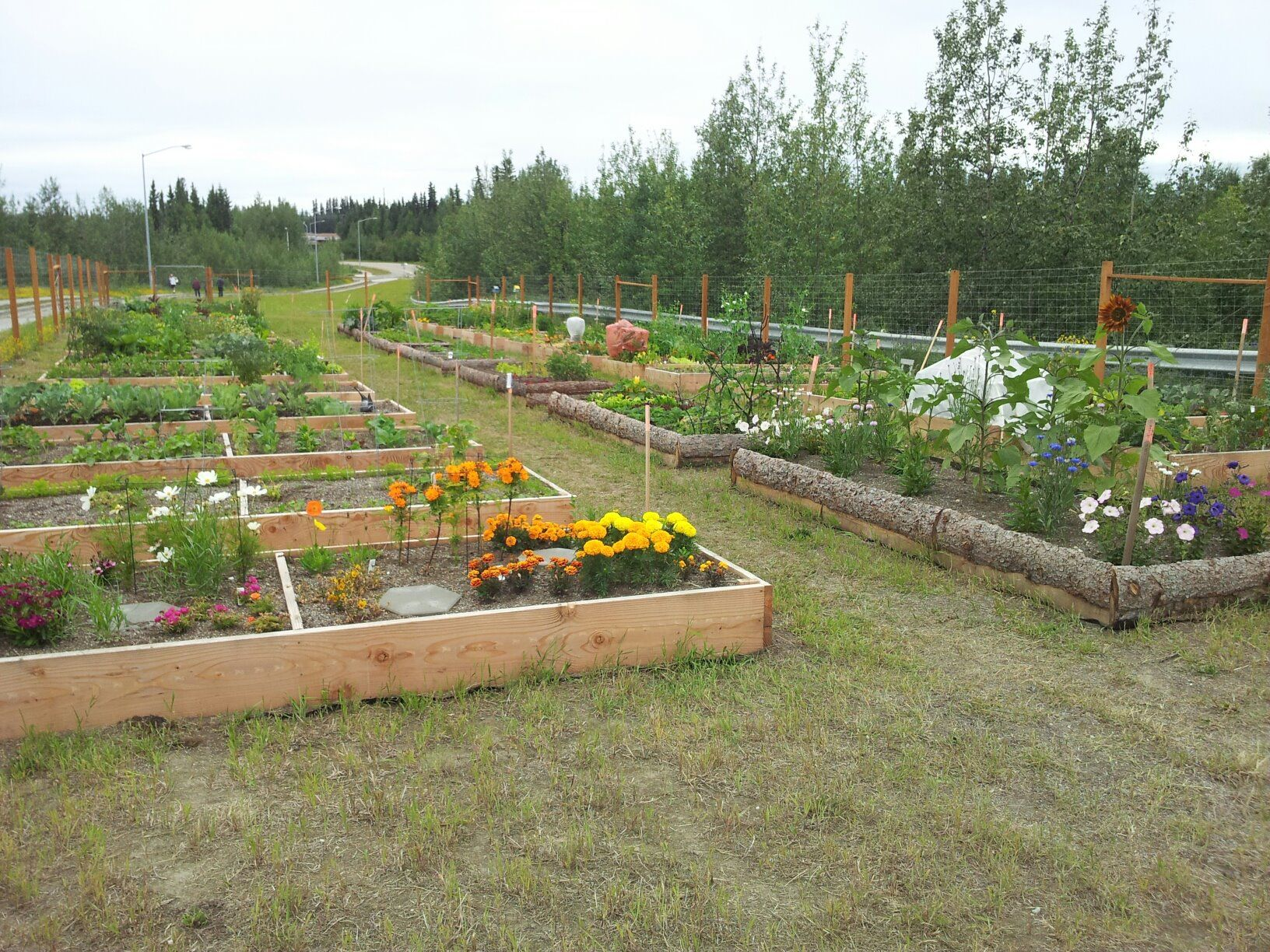 Campus community garden plots available - UAF Cornerstone news and ...